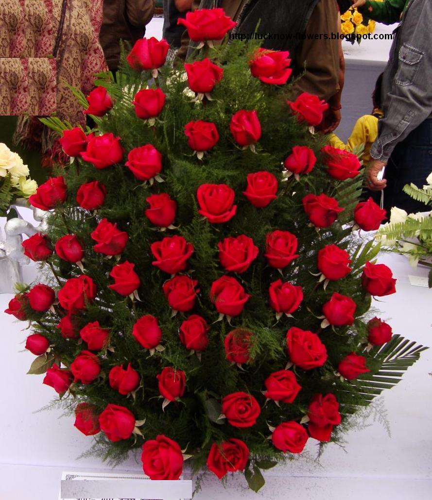 Red Roses Tree Flowers In Jordan Delivery Send Orchids Flowers